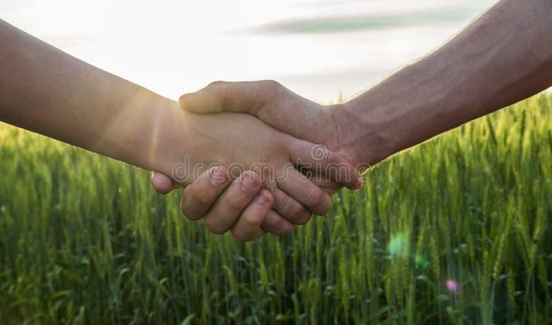 Due agricoltori che stringono le mani contro lo sfondo di un giacimento di grano, primo piano fotografia stock libera da diritti