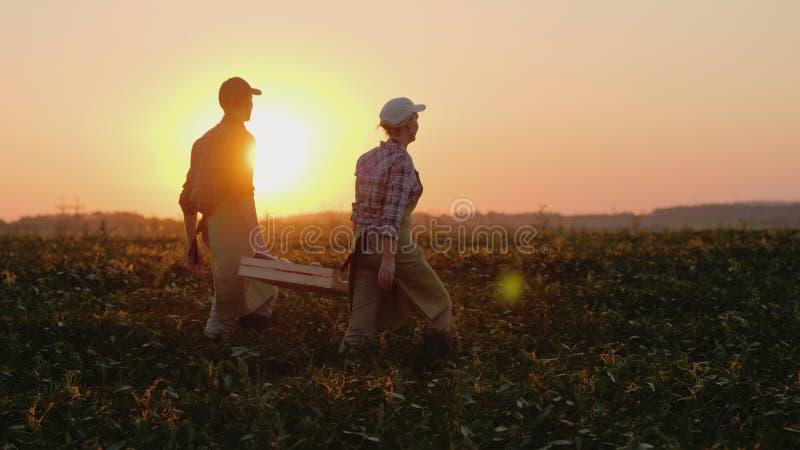 Due agricoltori portano una scatola pesante con le verdure attraverso il campo fotografie stock libere da diritti