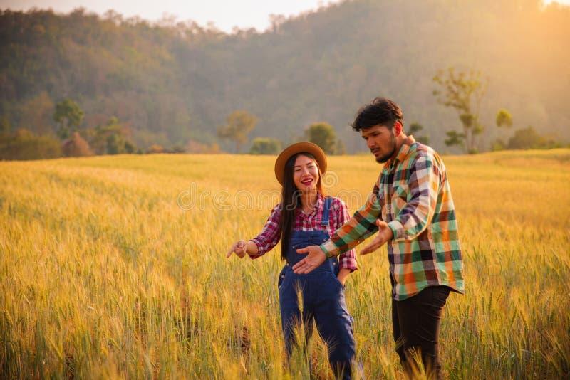Due agricoltori uomo e condizione della donna in un giacimento di grano fotografia stock libera da diritti