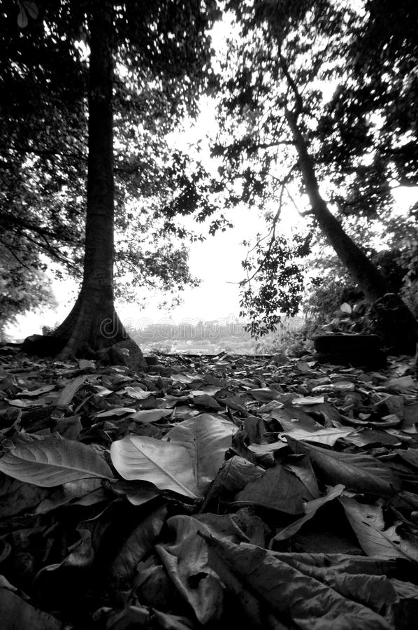 Due alberi backlited nella caduta in anticipo fotografia stock libera da diritti