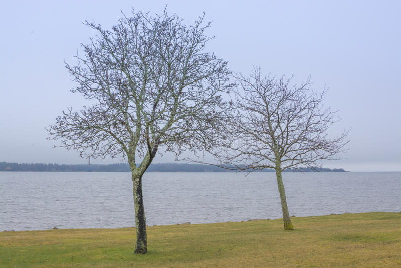 Due alberi dal lago Vanern fotografia stock libera da diritti