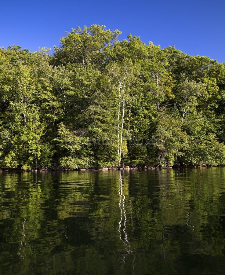 Due alberi di betulla riflessi in lago fotografia stock