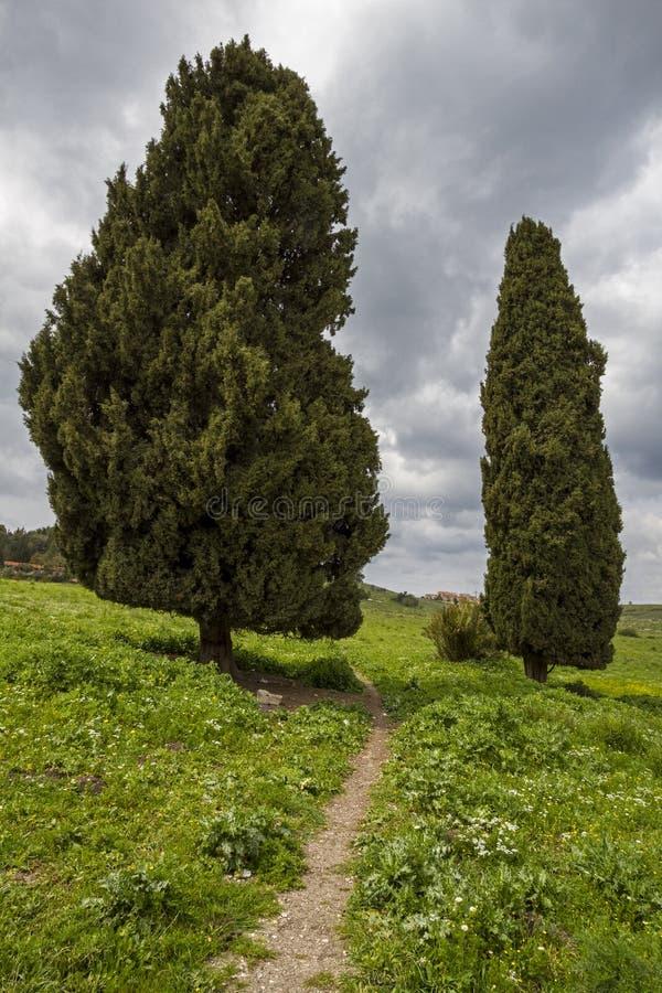 Due alberi di cipresso immagine stock libera da diritti