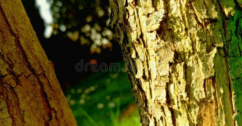 Due alberi nel giardino fotografia stock