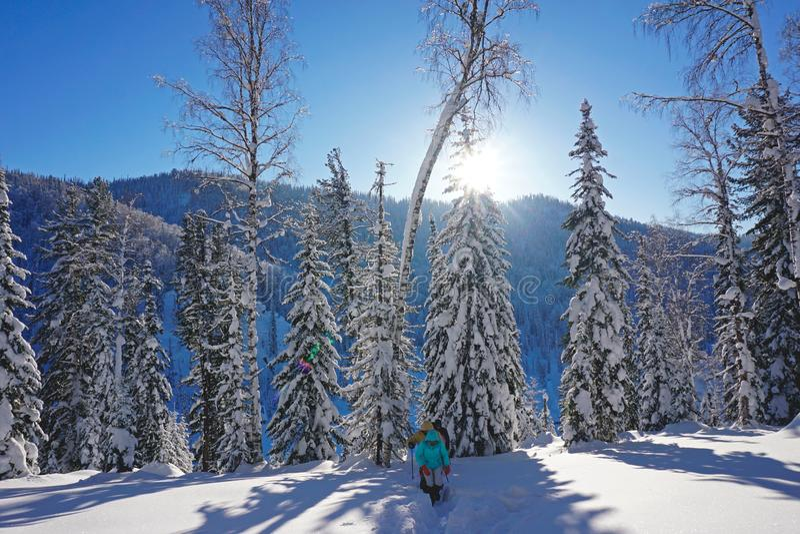 Due alberi nella neve, montagne nell'inverno fotografie stock libere da diritti