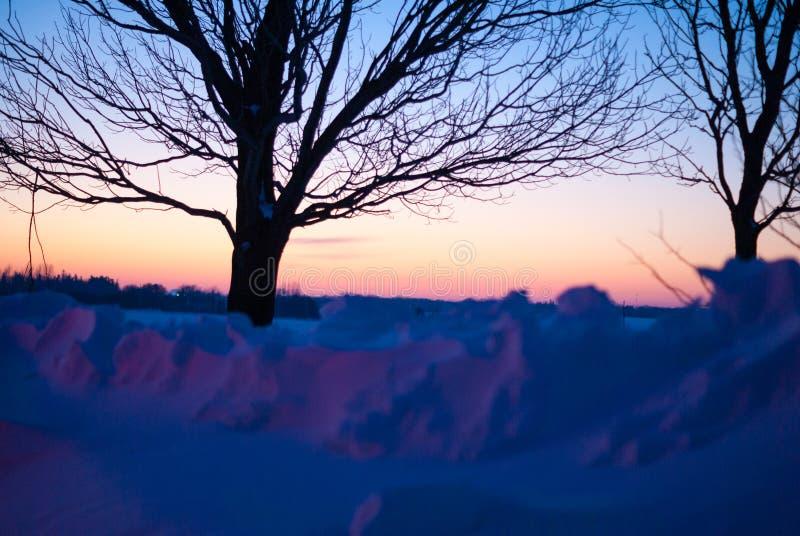 Due alberi in neve a penombra nell'inverno immagini stock