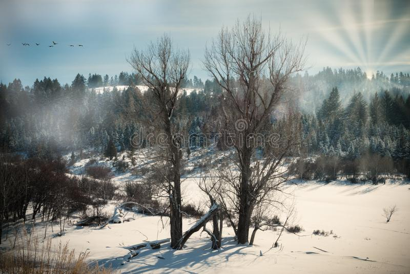 Due alberi nudi al bordo della foresta immagine stock