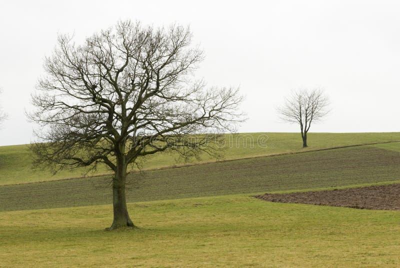 Due alberi su un campo immagini stock libere da diritti