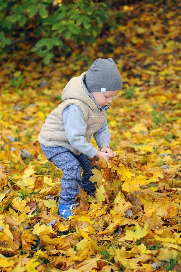 Due anni di condizione del ragazzo sulle foglie di autunno di caduta fotografie stock