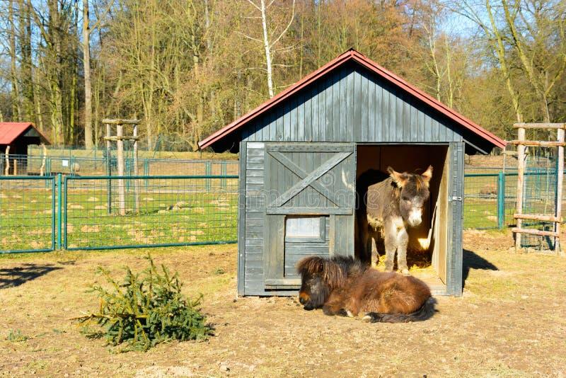 Due asini che riposano in un recinto chiuso fotografia stock libera da diritti