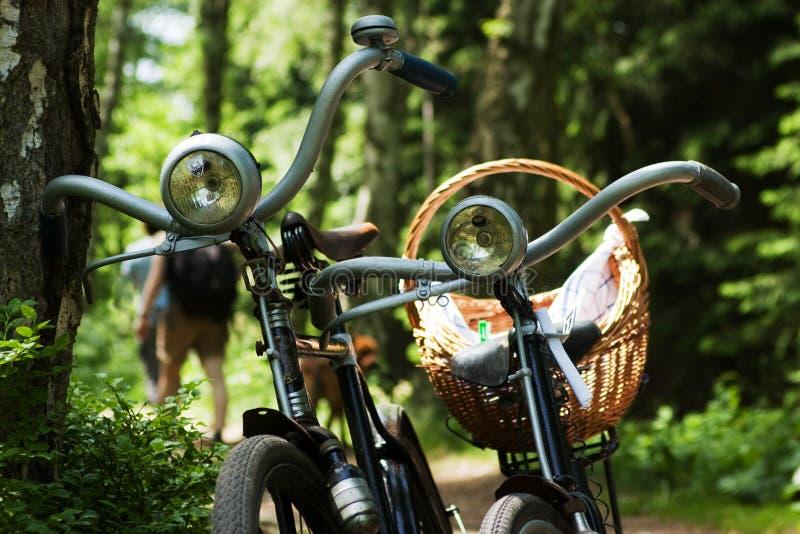 Due bici in foresta fotografia stock libera da diritti