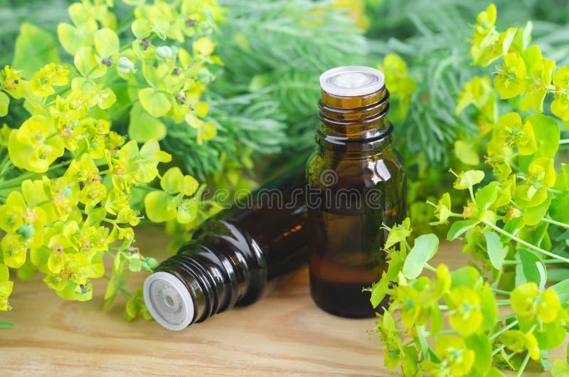 Due bottiglie dei cyparissias dell'euforbia, estratto di euforbia del cipresso (tintura del Milkweed, infusione, olio di erbe) fotografie stock