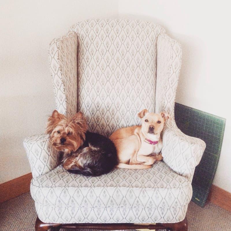 Due cani che dividono spazio fotografie stock