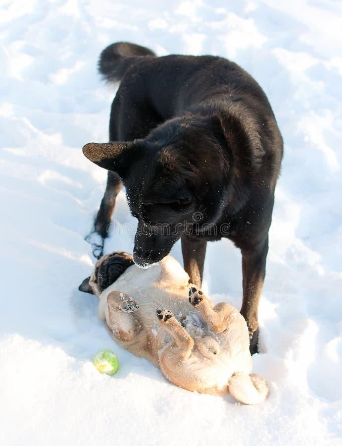 Un gioco di due cani immagini stock libere da diritti