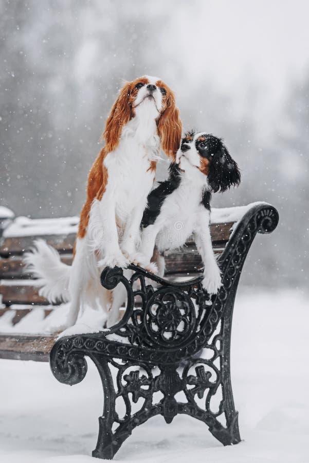 Due cani che posano sul banco nell'inverno fotografie stock libere da diritti