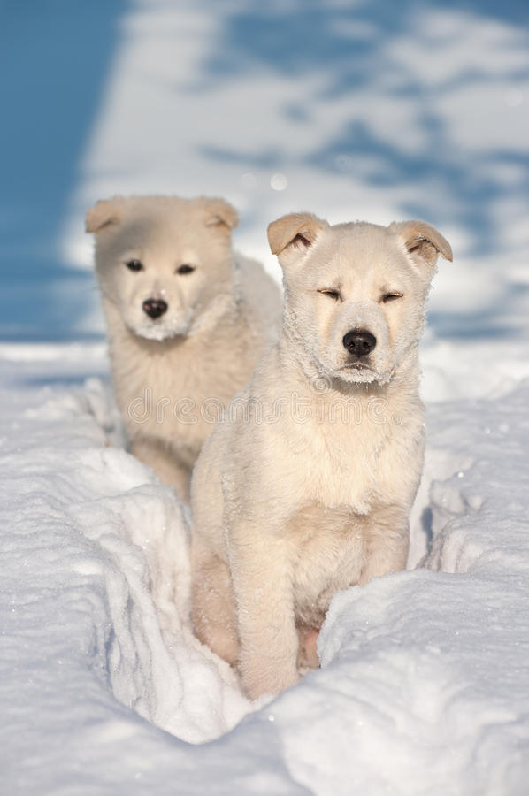 Due cani di cucciolo che vagano fotografia stock