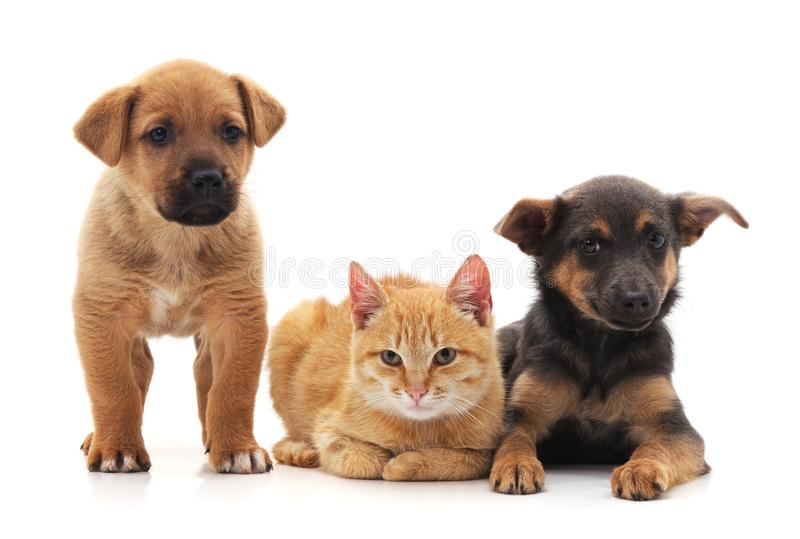 Due cani e gatti fotografia stock libera da diritti