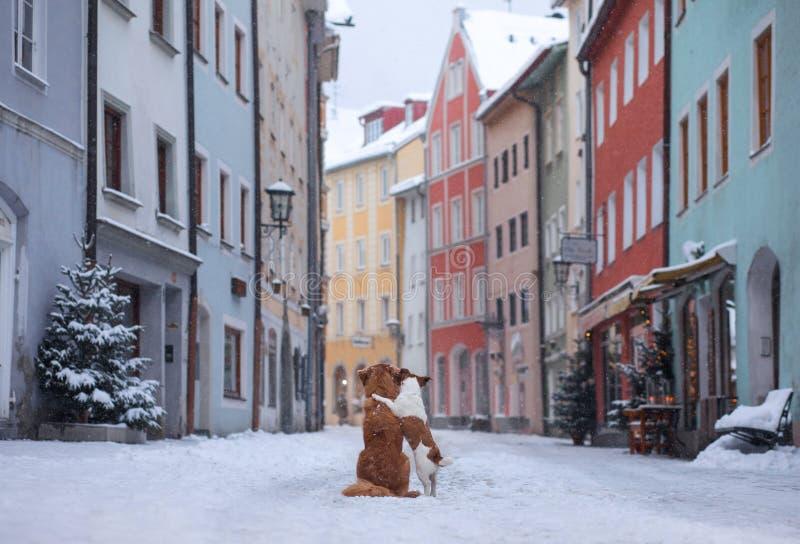Due cani si abbracciano ed esaminano la via di una cittadina Animale domestico nella città, passeggiata, viaggio immagini stock