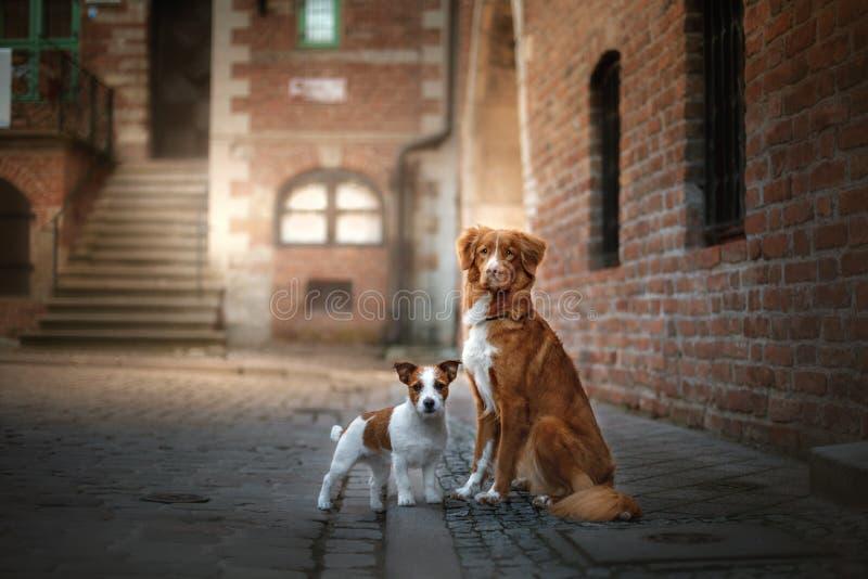 Due cani in vecchia città immagini stock libere da diritti