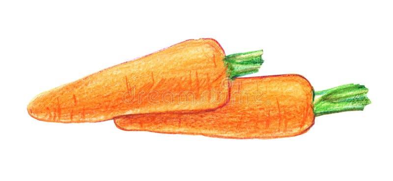 Due carote Disegno grafico con le matite colorate illustrazione vettoriale