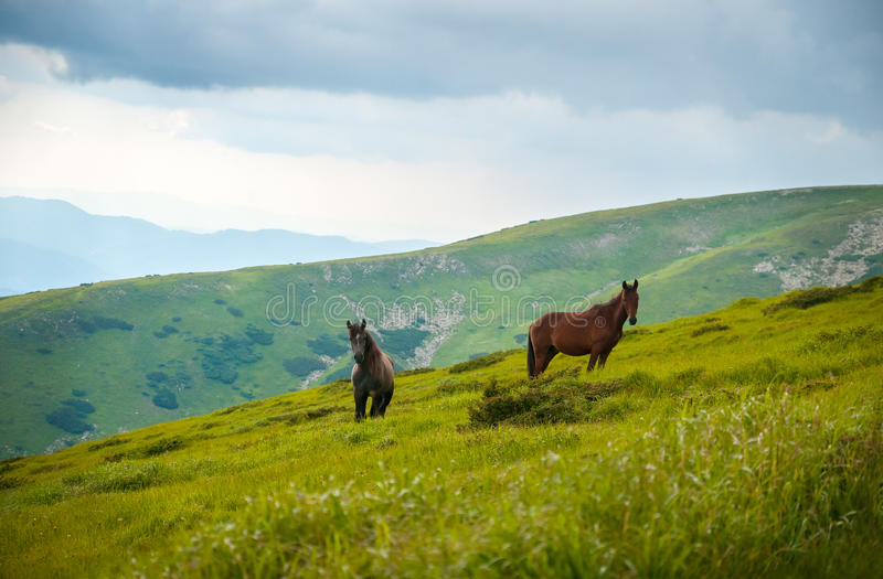 Due cavalli è pascuto contro le montagne di estate fotografia stock