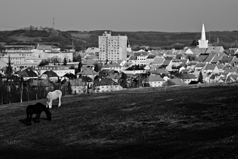 Due cavalli con la città ceca di Kadan su fondo nel tramonto fotografie stock