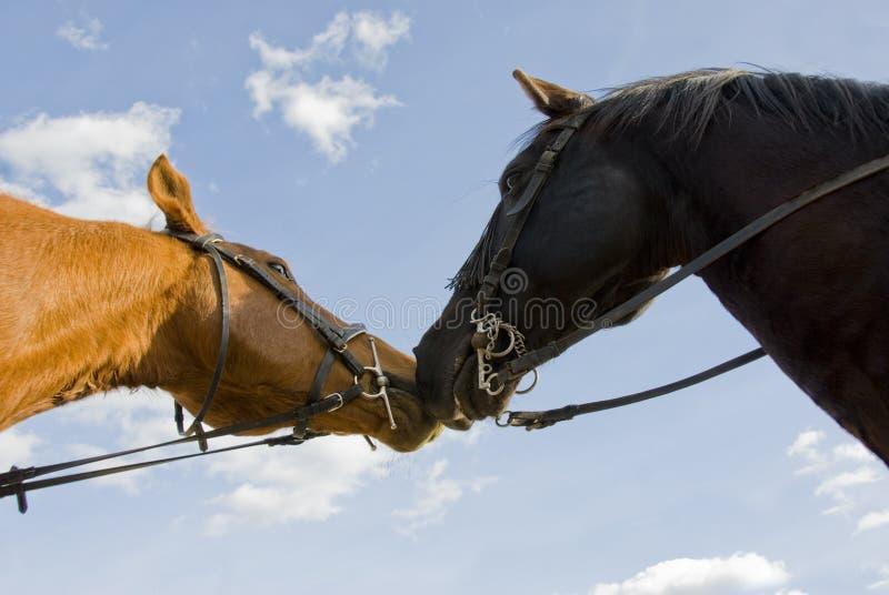 Due cavalli degli amici immagini stock libere da diritti
