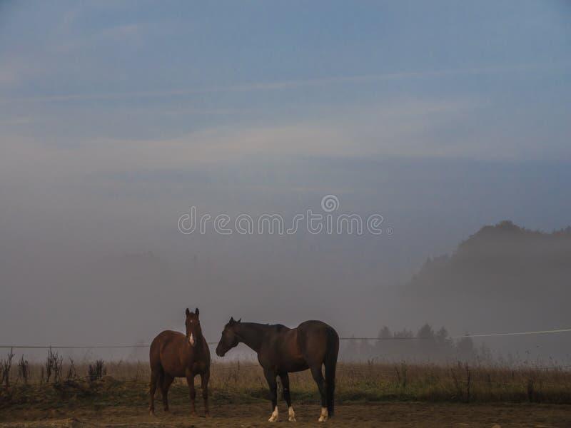 Due cavalli di Brown che stanno su un recinto chiuso immagine stock libera da diritti