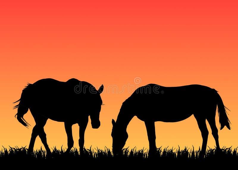 Due cavalli sul pascolo al tramonto illustrazione di stock