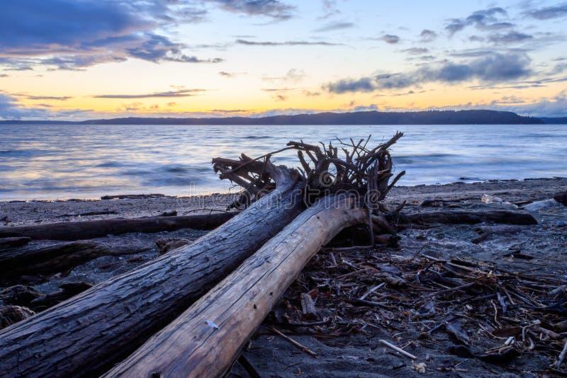 Due ceppi del legname galleggiante al tramonto immagine stock libera da diritti