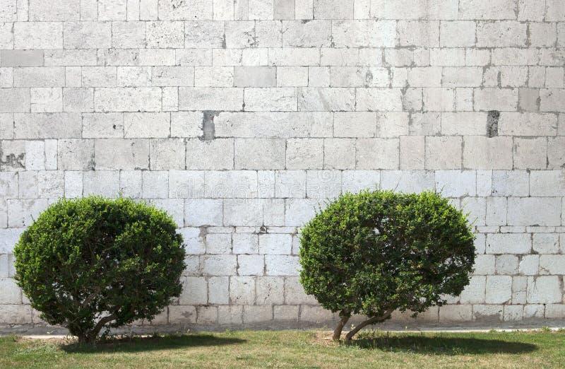 Due cespugli davanti alla parete di pietra fotografia for Case di pietra davanti