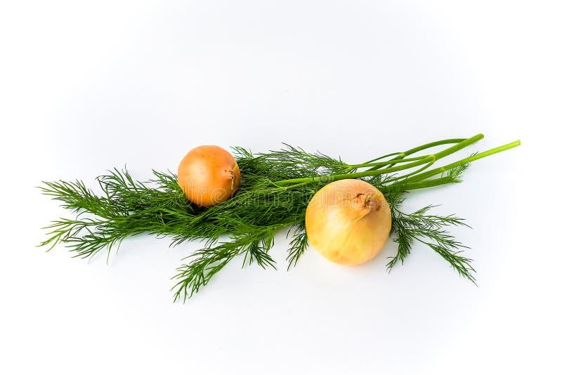 Due cipolle ed aneti isolati su bianco immagini stock libere da diritti