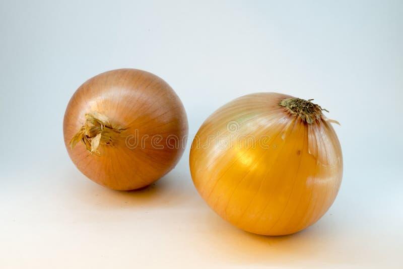 Due cipolle su un fondo bianco, isolato fotografia stock