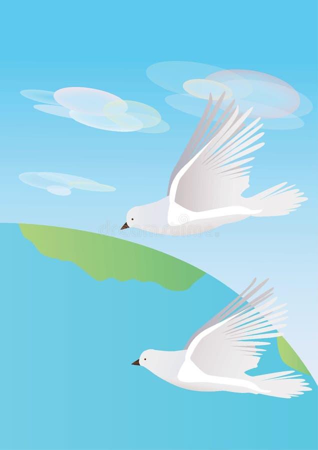 Due colombe bianche illustrazione di stock