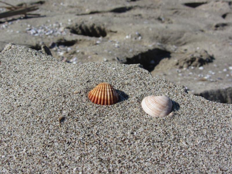 Due conchiglie sulla sabbia Priorità bassa della spiaggia di estate Vista superiore fotografia stock