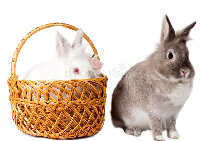 Due conigli adorabili dell'animale domestico fotografia stock