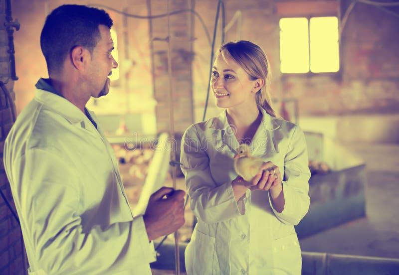 Due conversazione veterinaria, uno che mangia anatroccolo immagine stock libera da diritti