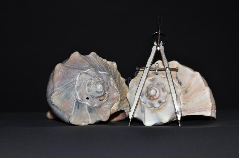 Due coperture della buccina con una bussola che circonda uno della spirale del ` s di Shell fotografia stock