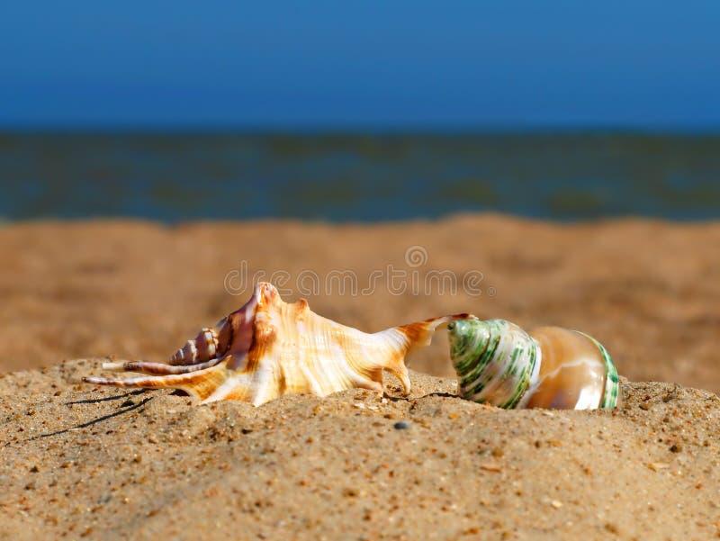 Due coperture della conca su una spiaggia. fotografia stock