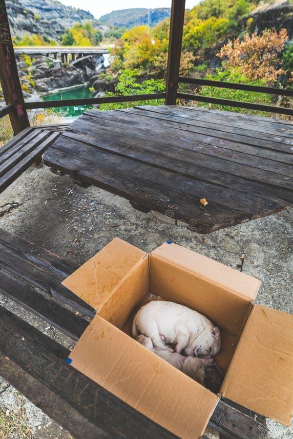 Due cuccioli soli fotografia stock