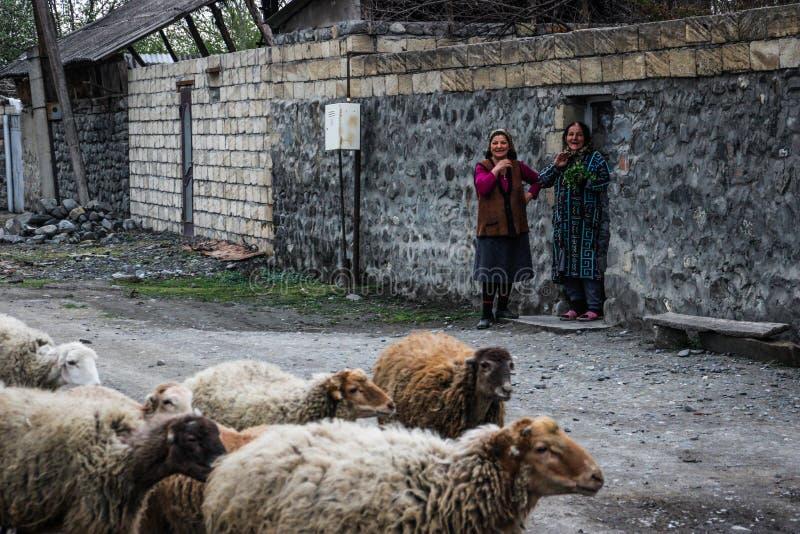 Due donne rurali anziane stanno ridendo Una moltitudine di pecore sta camminando lungo una strada rurale fotografie stock