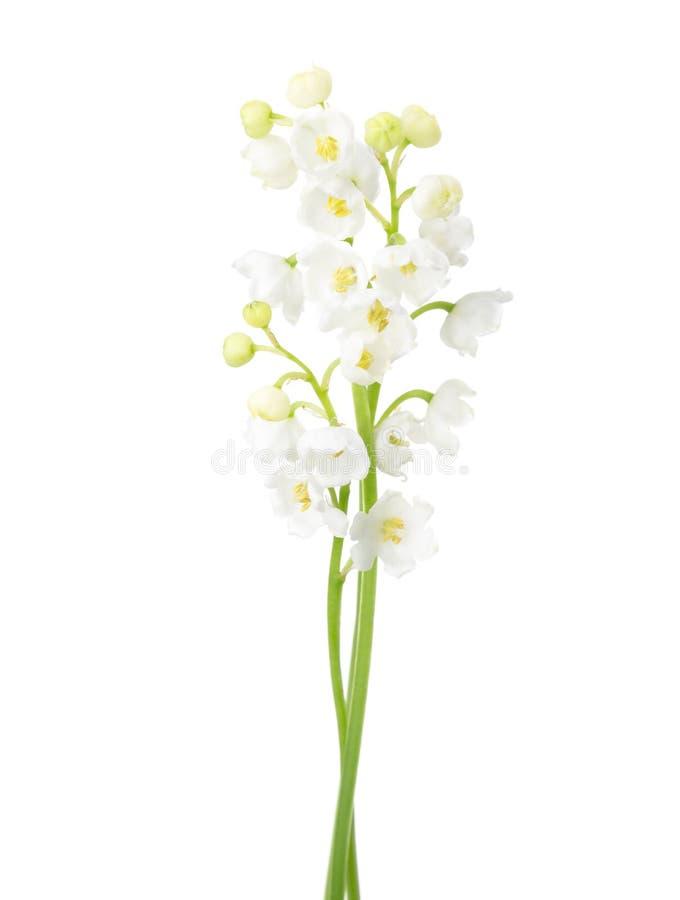 Due fiori isolati su bianco fotografia stock