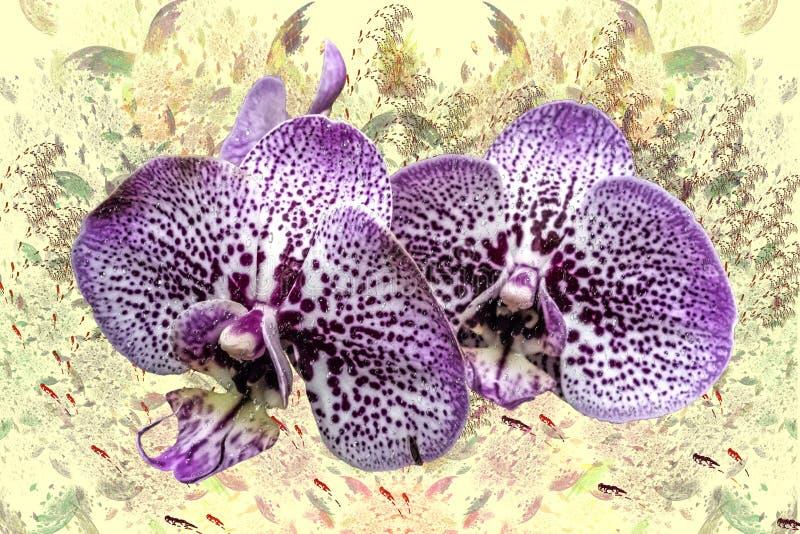 Due fiori porpora di un primo piano di phalaenopsis delle orchidee royalty illustrazione gratis