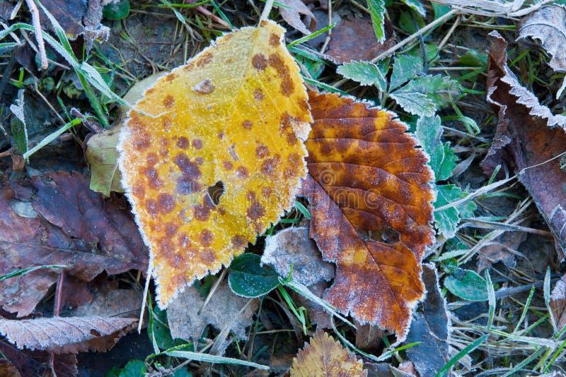 Due fogli di autunno nel gelo fotografie stock