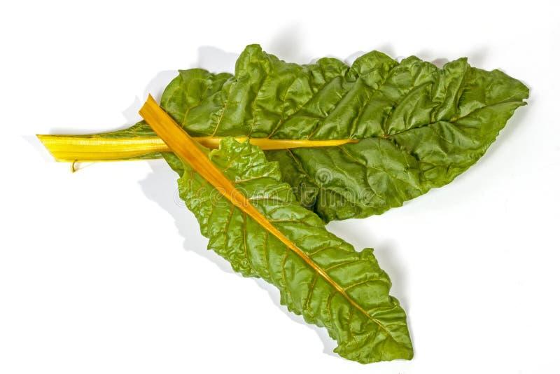 Due foglie verdi della bietola con il gambo giallo immagine stock