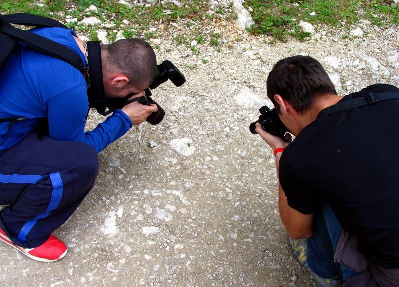 Download Due Fotografi Che Provano Una Macro Fotografia Stock - Immagine di insetto, immagine: 221586