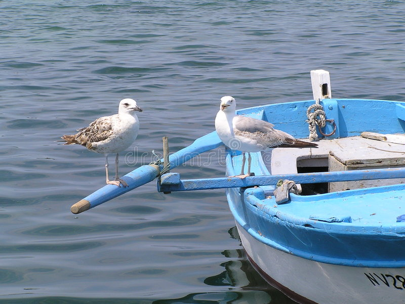 Download Due gabbiani fotografia stock. Immagine di uccello, estate - 218752