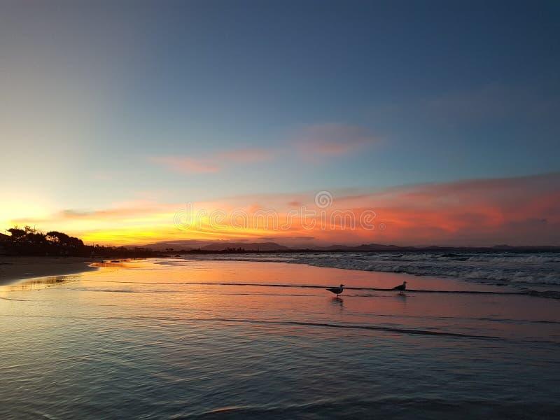 Due gabbiani al tramonto fotografia stock