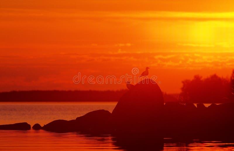 Due gabbiani che stanno sulle rocce alla luce di tramonto immagine stock libera da diritti