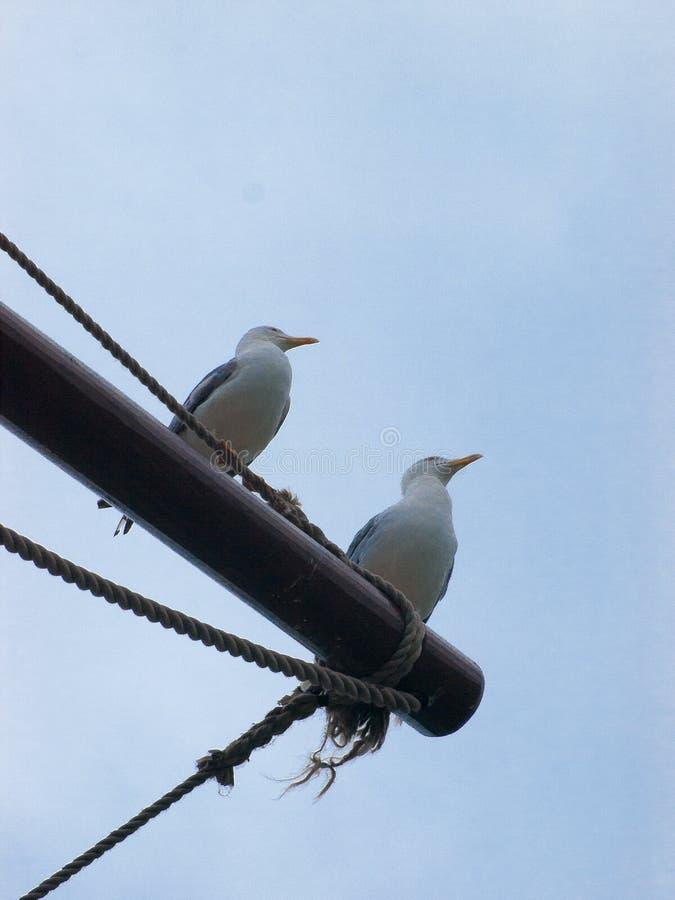Due gabbiani si sono appollaiati sull'albero di una nave immagini stock libere da diritti